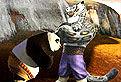 Kung Fu Panda in Duel
