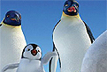 Gaseste Diferentele din Happy Feet