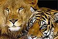 Animale Salbatice in Detaliu
