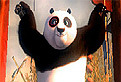 Kung Fu Panda Cauta Alfabetul