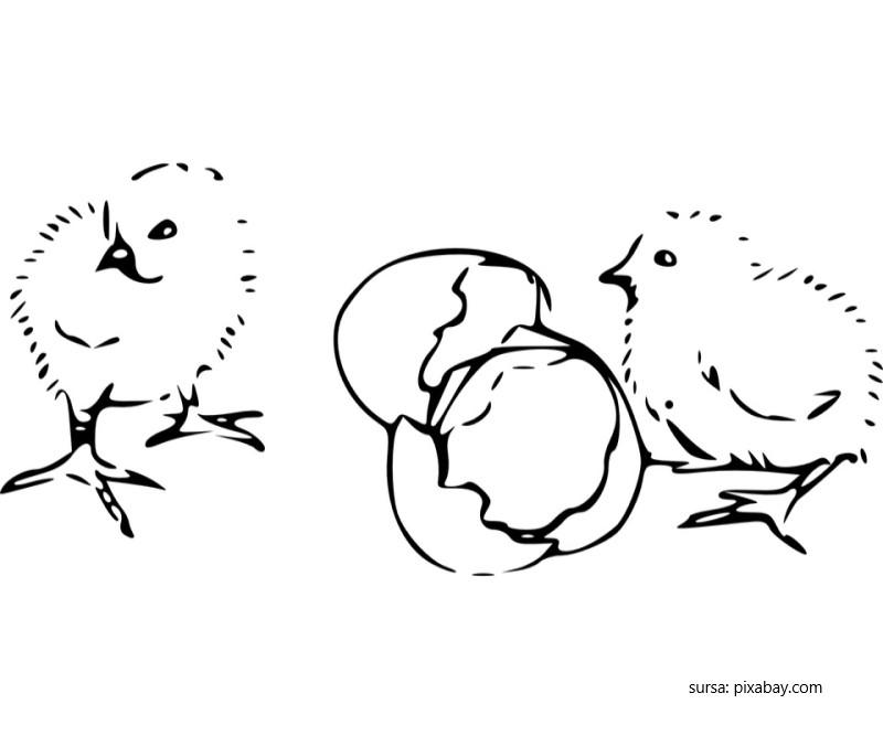 Puisorii de Pasti au iesit din oua