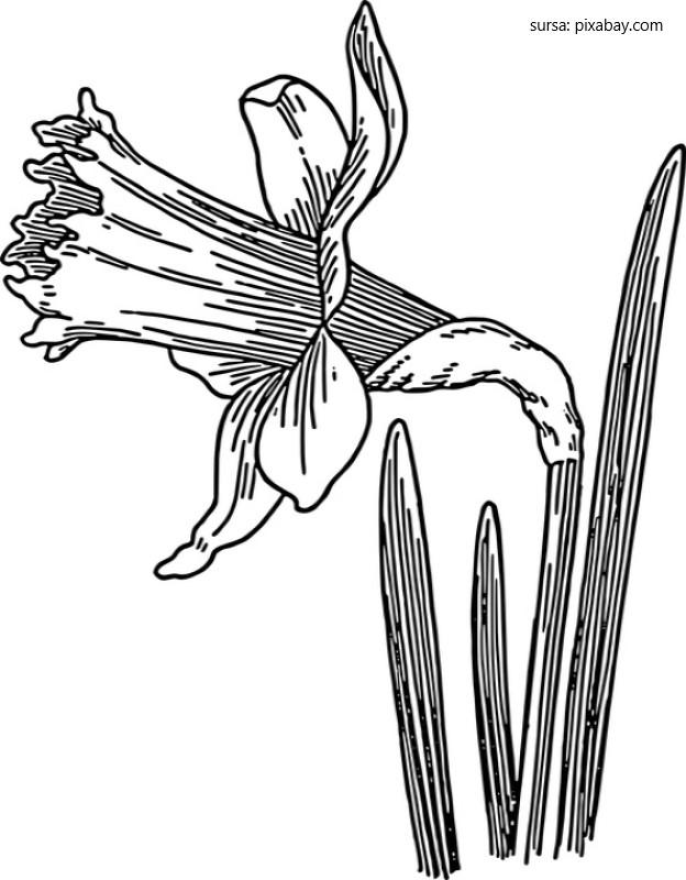 Narcisa, simbol de Pasti