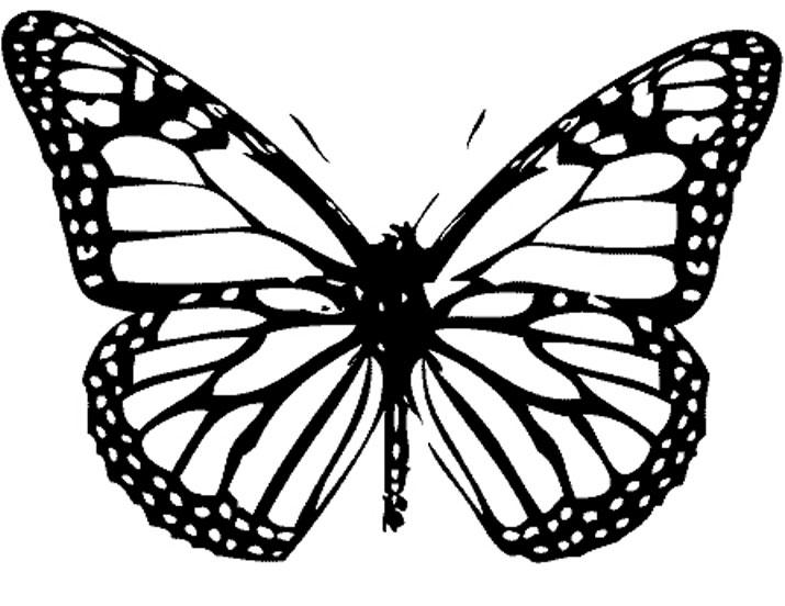 Распечатать раскраску бабочки и цветы