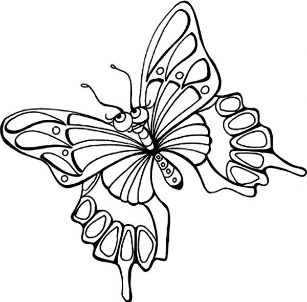 Un fluture superb