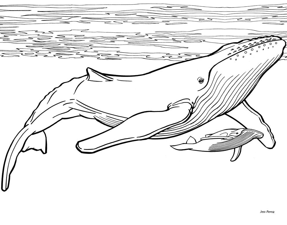 Plansa de colorat cu o balena si puiul sau for Whales coloring pages