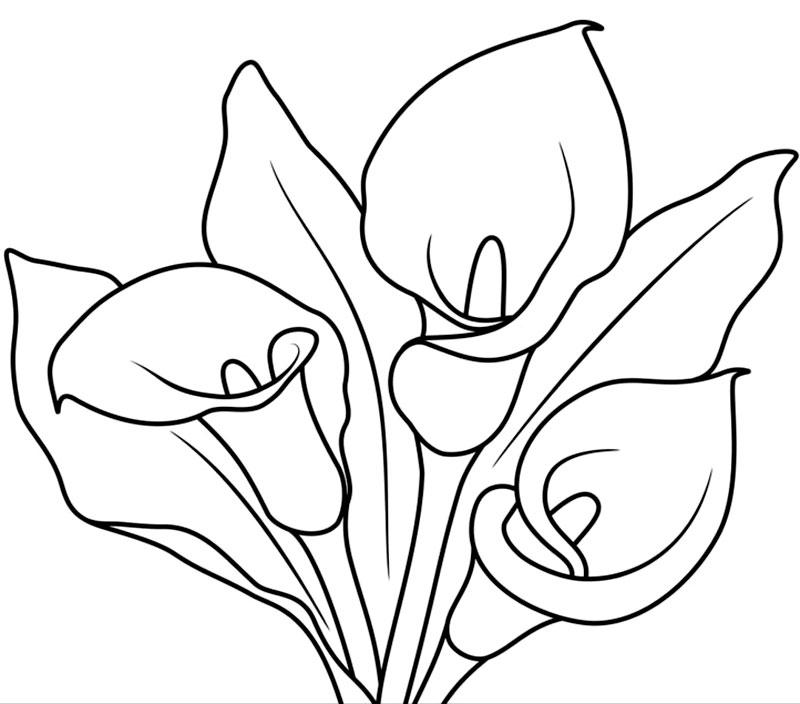 Floarea cala