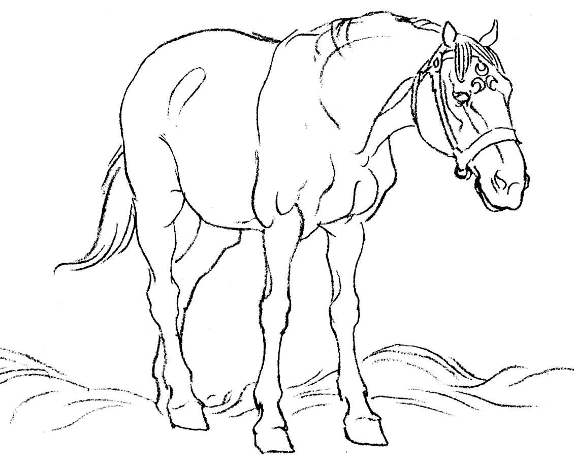 Calul parasit