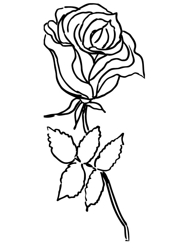 Trandafir Cu Frunze