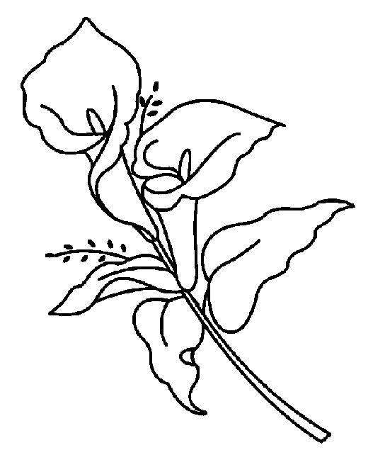 Coloreaza floarea cala