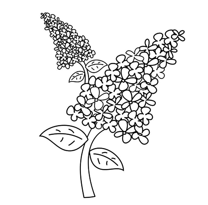 Coloreaza floarea de liliac!