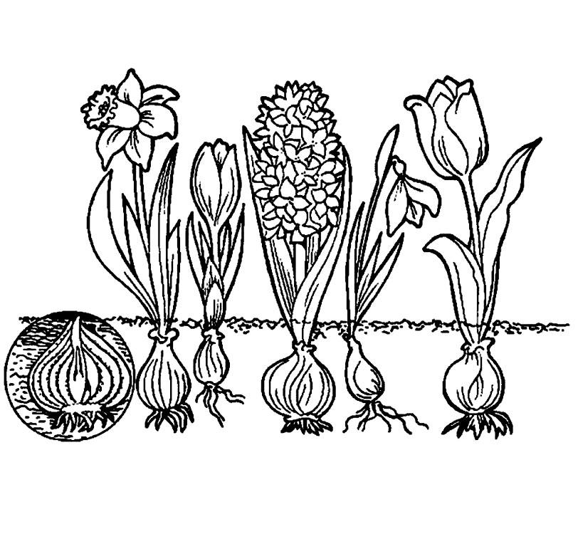Florile Care Apar Primavara