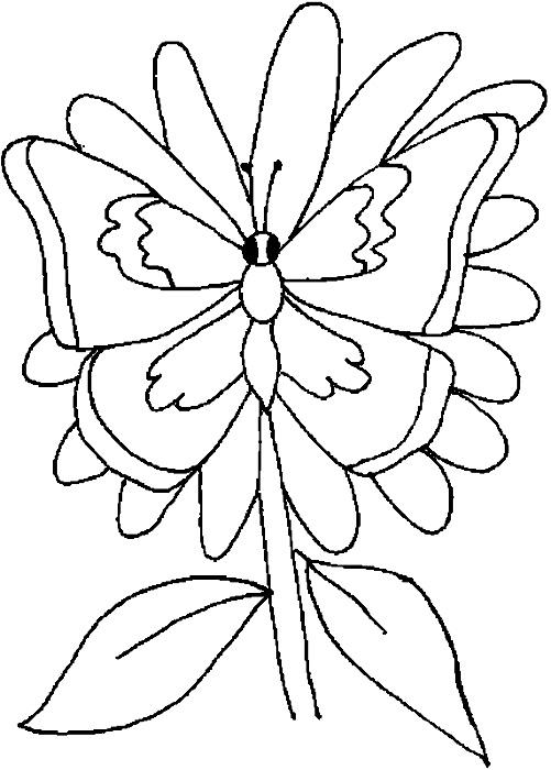Fluture pe floare