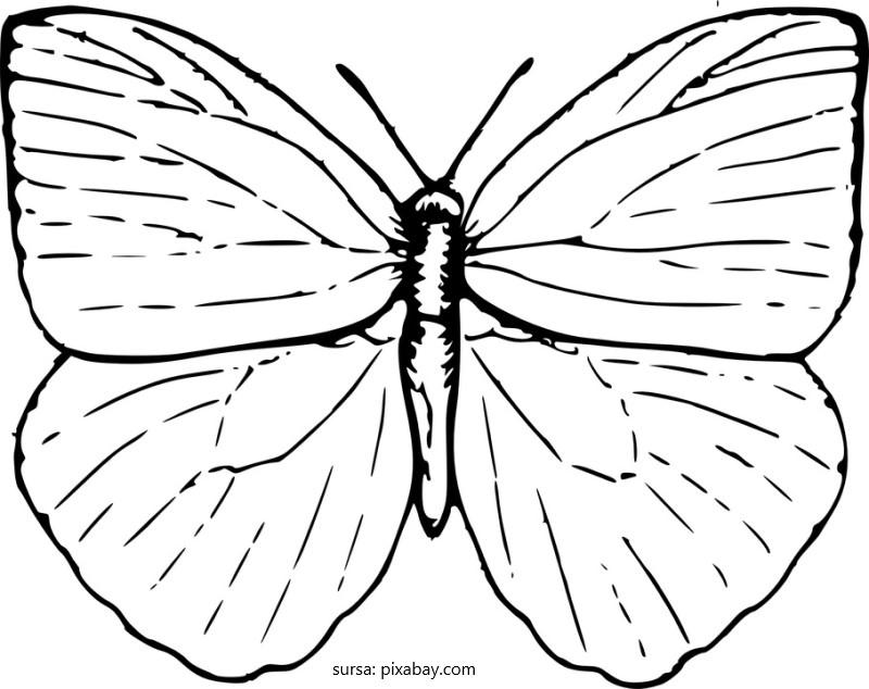 Coloreaza acest fluture!