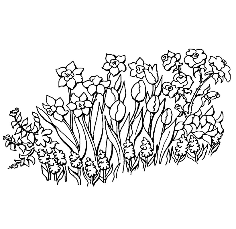 Lalele Narcise Zambile Sau Trandafiri