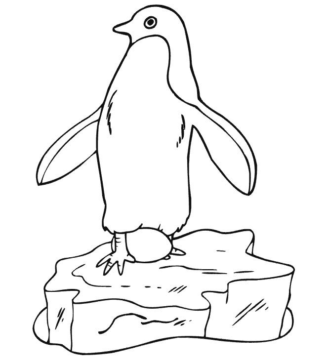 Pinguinul Si Oul De Colorat