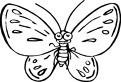 Aseaza culorile pe fluture