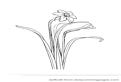 Narcise, flori de primavara