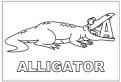 Litera A de la aligator