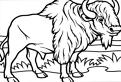 Plansa de colorat cu un bizon