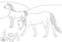 Plansa de colorat cu cai