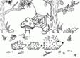 Arici in padure