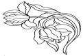 Lalele inflorite de colorat