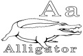 A este de la aligator