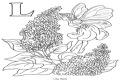 Litera L de la flori de liliac