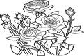 Multi trandafiri de colorat