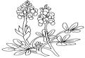 Plansa de colorat cu flori Nemtisor