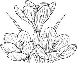 Trei mandre flori
