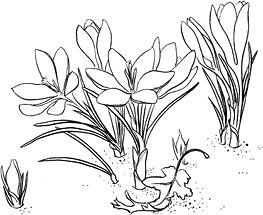 Floricele mititele