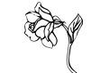 Trandafir de colorat