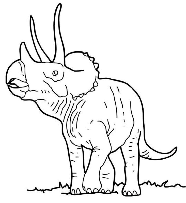 Un triceratops curios