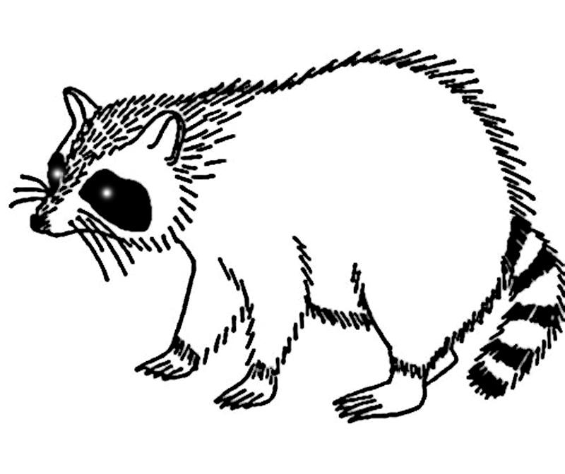 Un raton
