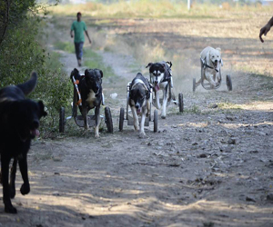 Vedetele autohtone vor strange hrana pentru animalele fara adapost la PetExpo