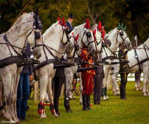 Karpatia Horse Show implineste cinci ani de cand si-a deschis portile spectatorilor!