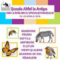 Scoala Altfel la Muzeul Antipa, 18 - 22 aprilie 2016