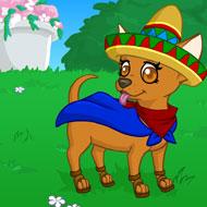 Playful Chihuahua
