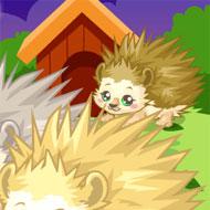 Hedgehog Care