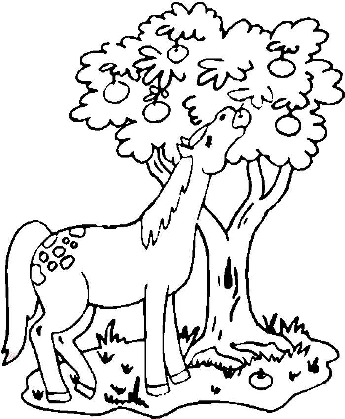 Calul care mananca mere