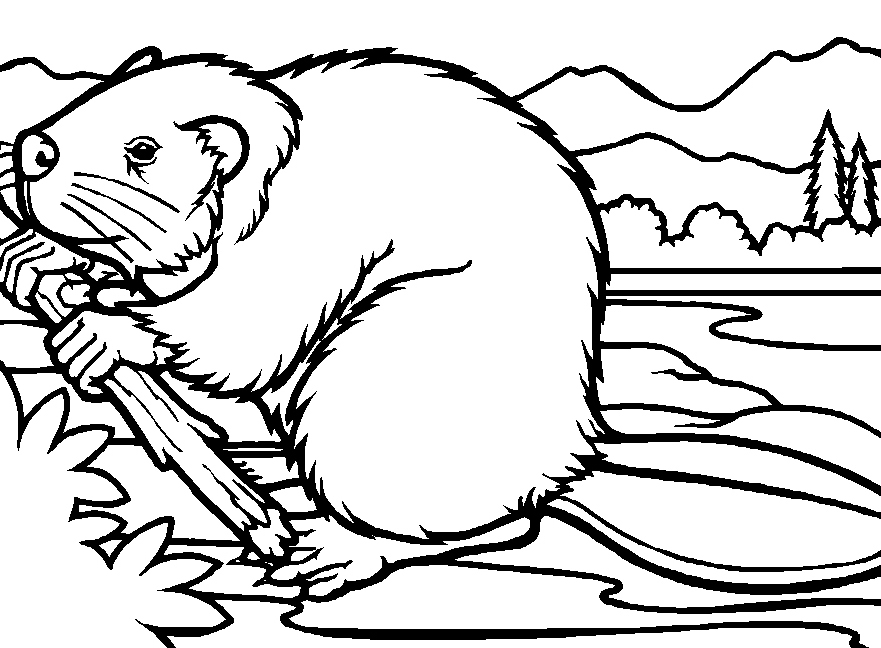 Plansa de colorat cu un castor
