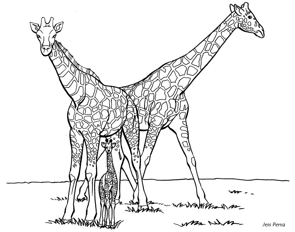 Plansa de colorat cu girafe