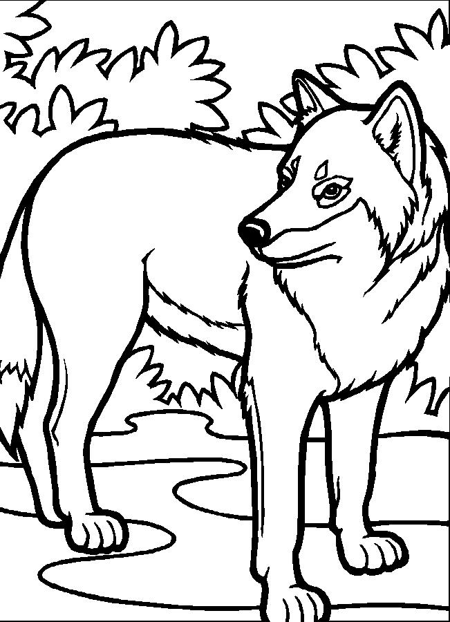 Plansa de colorat cu un lup