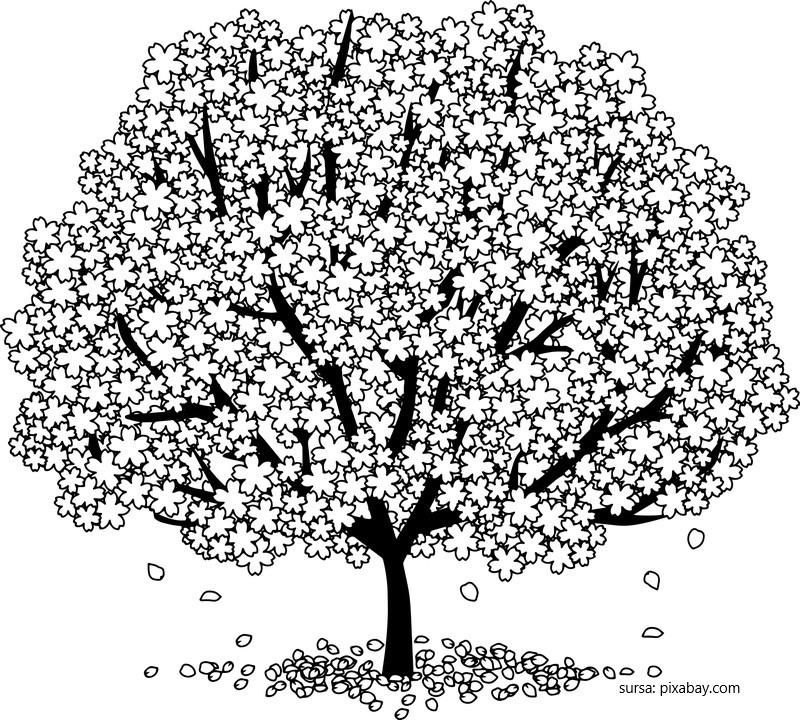 Pomul plin cu flori