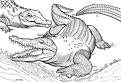 Plansa de colorat cu crocodili fiorosi