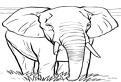 Plansa de colorat cu elefantul