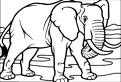 Plansa de colorat cu un elefant