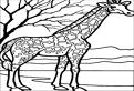 Plansa de colorat cu o girafa