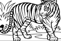 Plansa de colorat cu un tigru